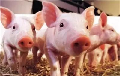 四川:名山区全链条监测监管 打一场漂亮的生猪保供战!