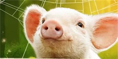 猪价榜首频繁变动,连跌价也开始争抢了?