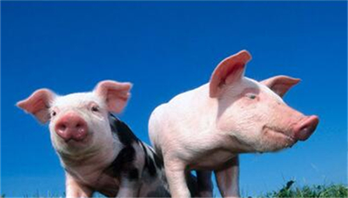 母猪推迟分娩的原因分析及处理技术(1)