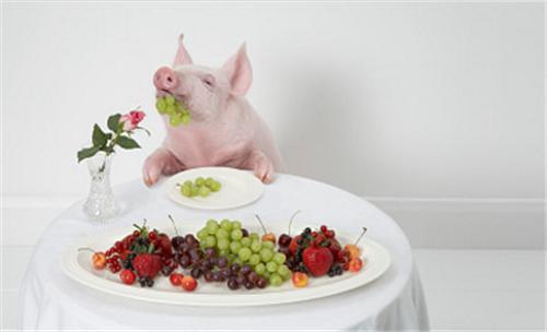 猪价上涨好景不长?下跌才是常态?