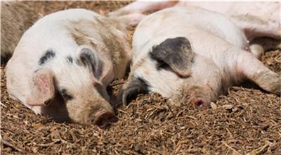 """猪肉那些事!本轮猪价上涨是不是""""猪周期""""?"""