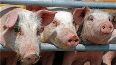 厦门:生猪养殖贷款贴息,每年最高800万元补助!