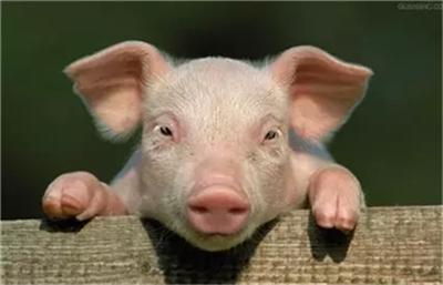 山东:猪肉价格五周连降,市场短时供过于求!
