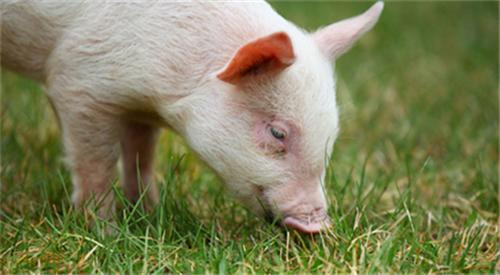 青海省:《关于促进生猪生产转型升级的实施意见》