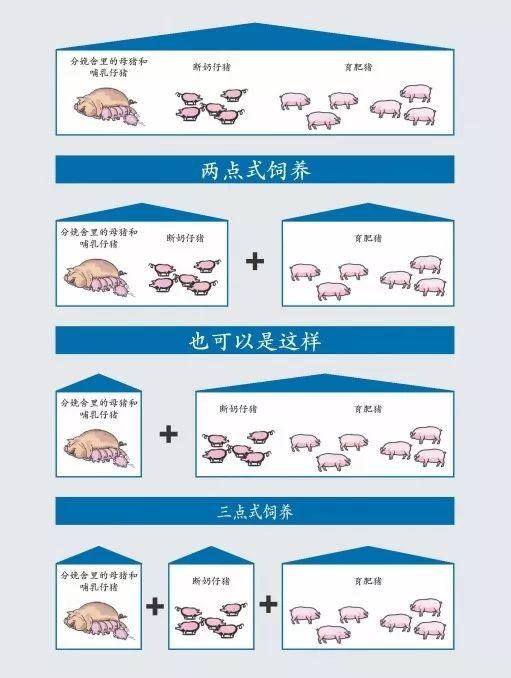 健康养猪丨多点式饲养与批次化生产