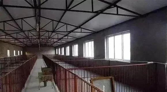在农村办个养猪场,该怎样科学建设好?听听专业人士怎么说