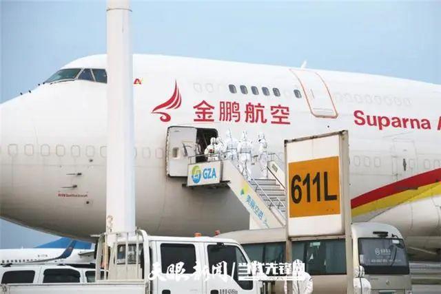 """贵州省:龙头企业专机引进法国良种助""""生猪稳产保供"""""""