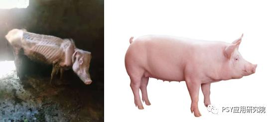 如何让幸存猪变成幸运猪