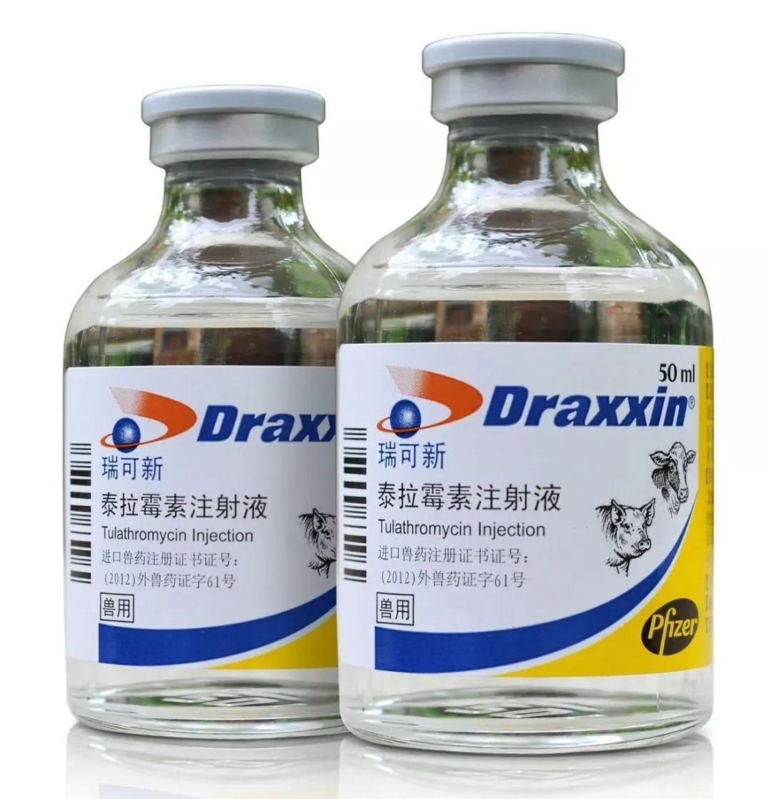 """预防和控制细菌性呼吸道疾病、缓解蓝耳病感染,灵活应用""""瑞可新""""可显著提高仔猪生产性能!"""