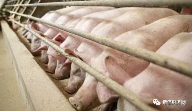 批次化生产-猪场批次化生产数据计算