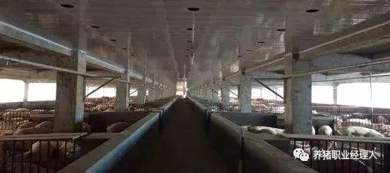 楼层养猪会是未来的一个方向吗?