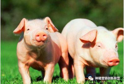 刚刚!英国、巴西2家肉企暂停对华出口!俄肉类伺机加速来华!