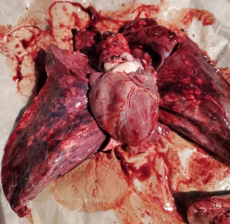 当前传胸发生仅仅是因为病原因素吗?