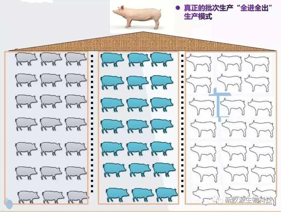 猪场批次化生产管理方案(2)