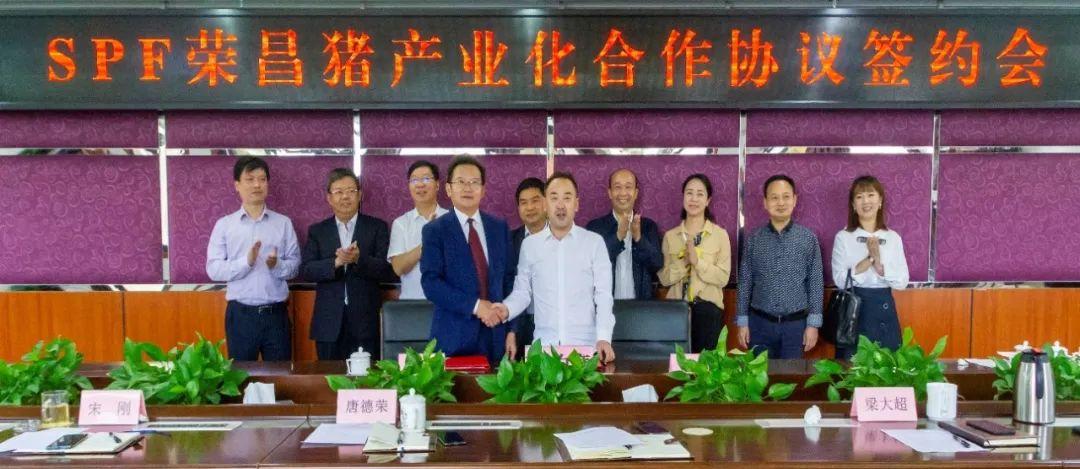 重庆市畜牧科学院与华派生物工程集团签署SPF荣昌猪产业化合作协议