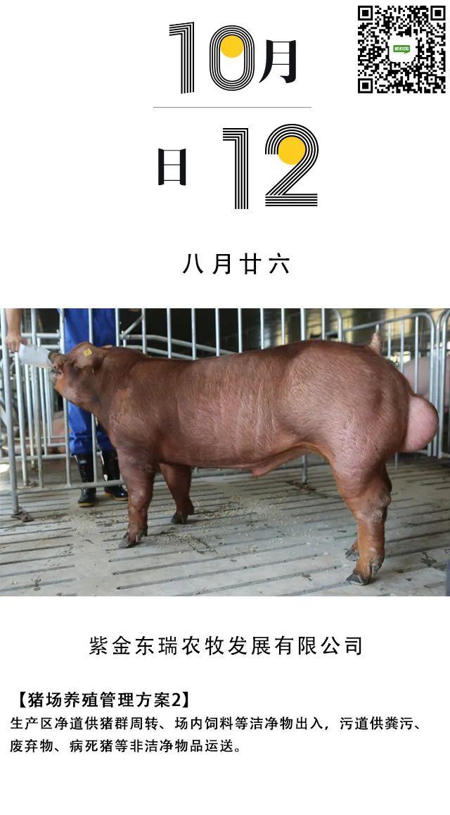 非瘟下这些猪场设计要点,你注意了吗?