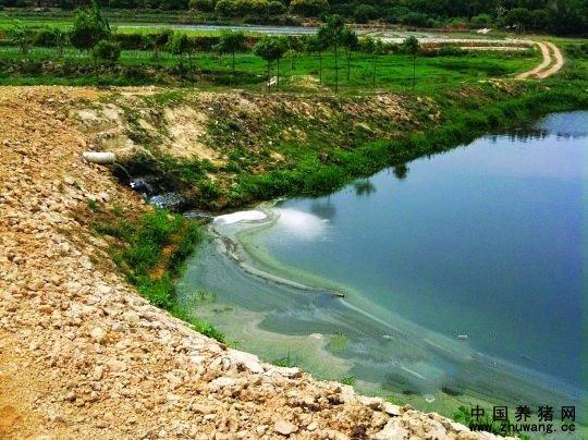 上游养猪场污染水库 下游村民担忧